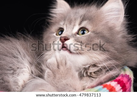 Cute fluffy kitten on the knitted scarf over black background