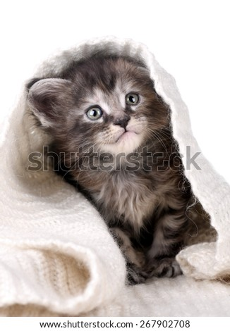 Cute fluffy kitten playing hiding in a blanket - stock photo