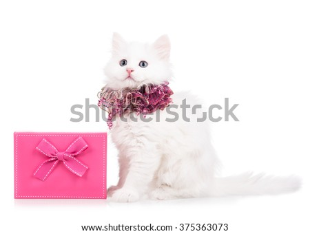 Cute fluffy kitten with gift box isolated over white background