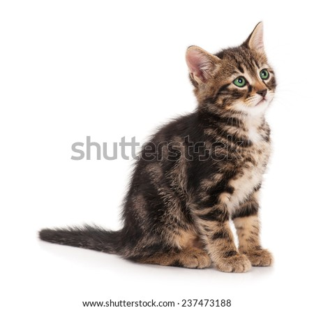Cute fluffy little kitten isolated on a white background cutout