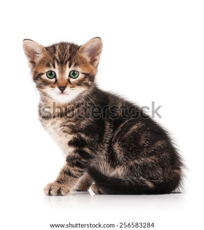 Cute fluffy little kitten isolated on a white background cutout - stock photo