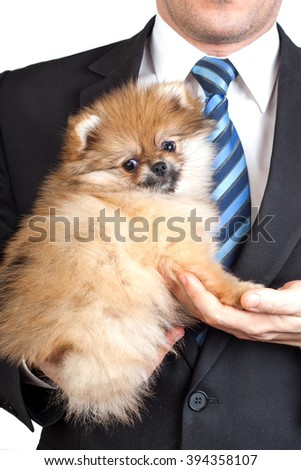 cute fluffy puppy Pomeranian in the hands of a man in a business suit