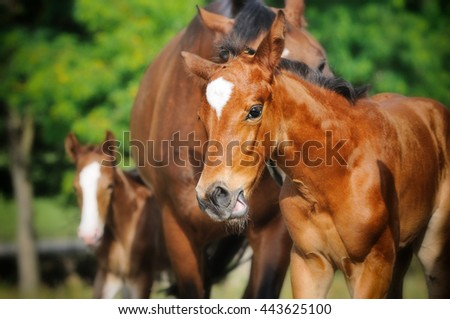 Cute foal and herd of horses - stock photo
