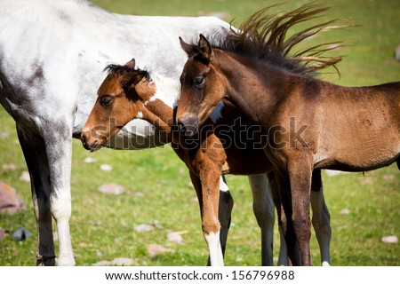 Cute foals and grey horse on the background - stock photo