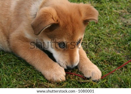 Cute free puppy from the pound - stock photo