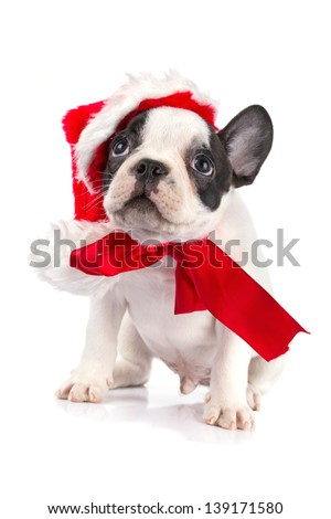 Cute french bulldog puppy with santa hat - stock photo