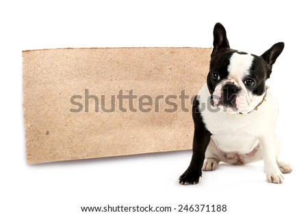 Cute French bulldog with paper sheet isolated on white - stock photo