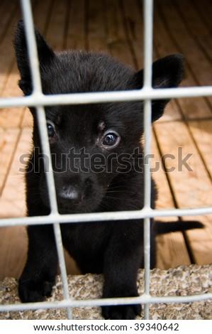 cute german shepherd puppy in cage - stock photo