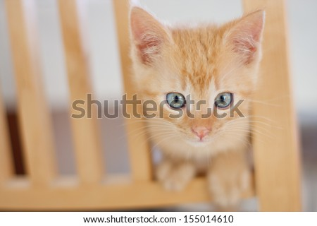 Cute ginger baby cat looking to camera - stock photo