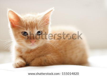 Cute ginger baby cat resting on restraint chair - stock photo