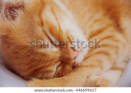 Cute ginger baby cat sleeping