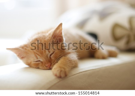 Cute ginger baby cat sleeping on restraint chair - stock photo
