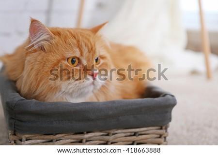 Cute ginger cat in wicker box - stock photo