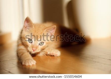 Cute ginger kitten lying on the floor - stock photo