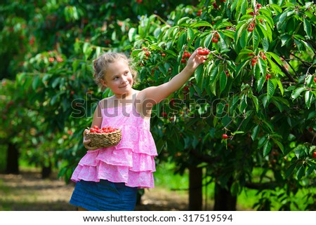 Cute girl  picks a cherry from a tree in cherry garden  - stock photo