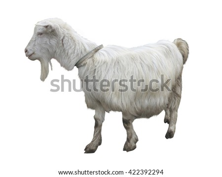 Cute goat isolated on a white background - stock photo