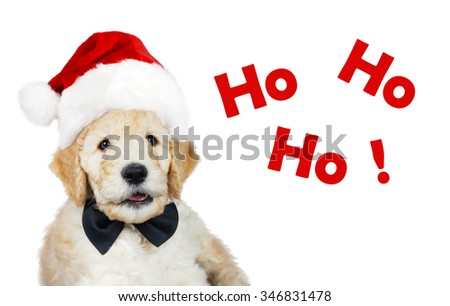 Cute goldendoodle puppy with Santa Christmas hat and black bow tie - stock photo