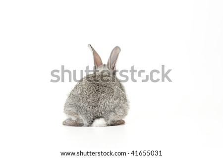 Cute gray baby rabbit on white background facing away