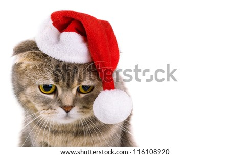 Cute gray cat in Santa Claus hat isolated on white background - stock photo