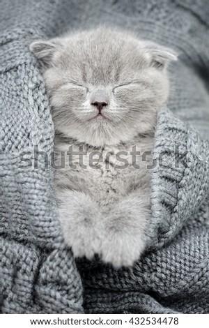 Cute gray funny kitten sleep in gray cloth - stock photo