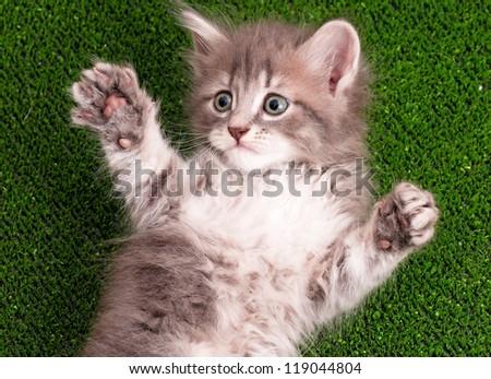 Cute gray kitten playing on artificial green grass - stock photo