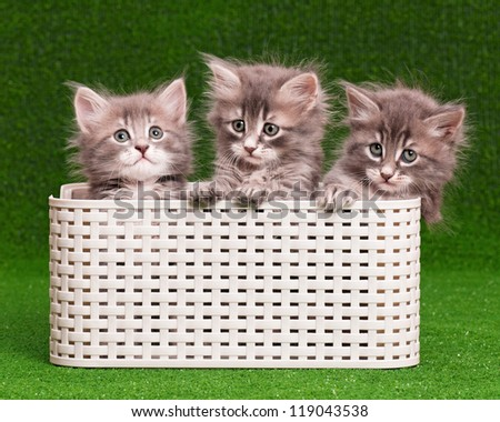 Cute gray kittens in box on artificial green grass - stock photo