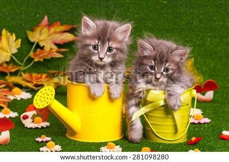 Cute gray kittens with yellow watering can on artificial green grass - stock photo