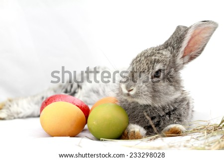 Cute gray rabbit with Easter eggs isolated on white - stock photo