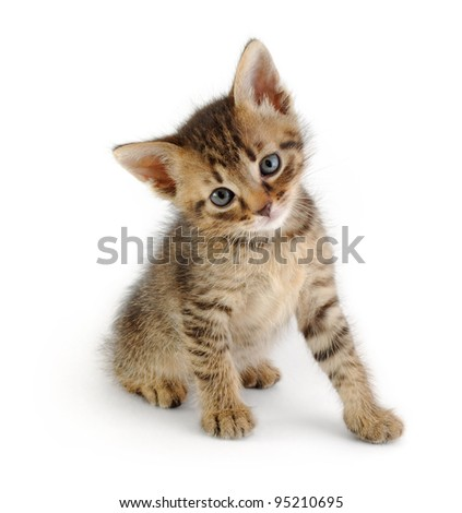 cute gray striped kitten, sitting and looking at the viewer, isolated - stock photo