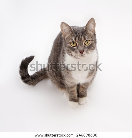 cute gray tabby cat looking up - stock photo