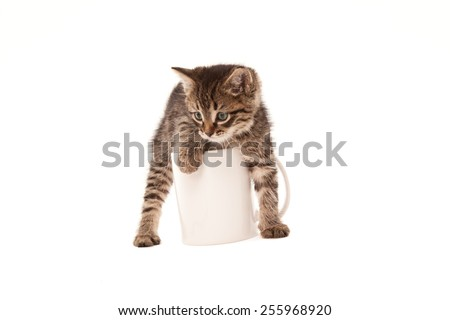 Cute green eyed kitten in white cup isolated on white - stock photo