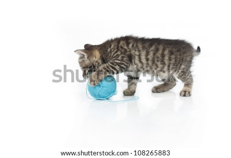 Cute grey kitten and ball of thread isolated on white background