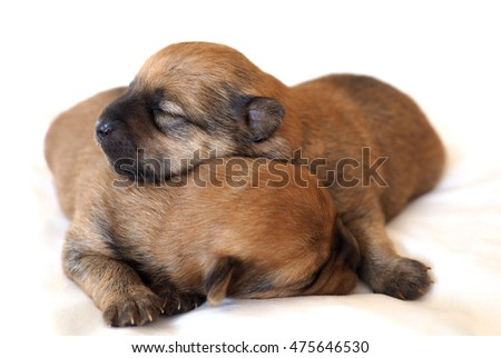 Cute group of baby puppies on white background