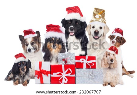 Cute Group of Pedigree Dogs with santa hats