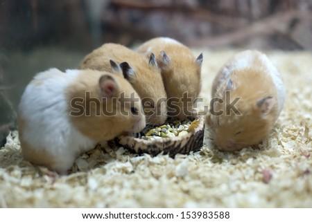 Cute hamster - stock photo