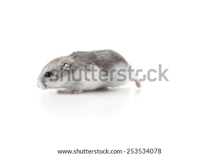 cute hamster moving - stock photo