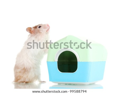 Cute hamster near house isolated white - stock photo