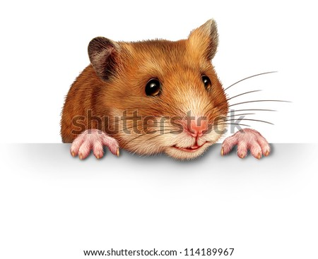 Cute hamster smiling and happy holding a blank white billboard communications card with pink hairy paws and realistic detailed fur on a white background.
