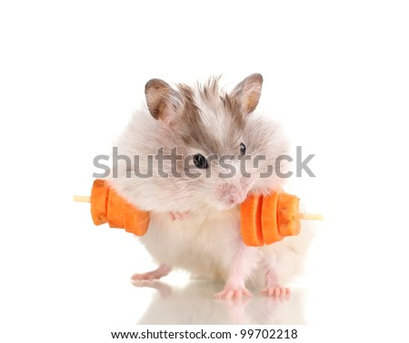 Cute hamster with carrot bar isolated white - stock photo
