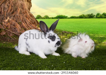 cute hare and a guinea pig eating grass under a tree on a summer day - stock photo