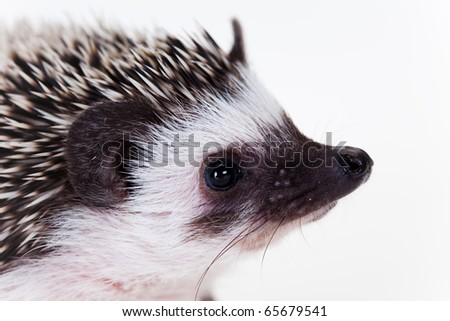 Cute hedgehog - stock photo