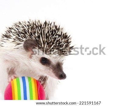 cute  hedgehog baby