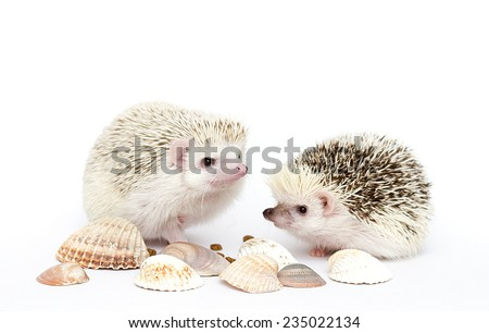 cute hedgehog baby background - stock photo