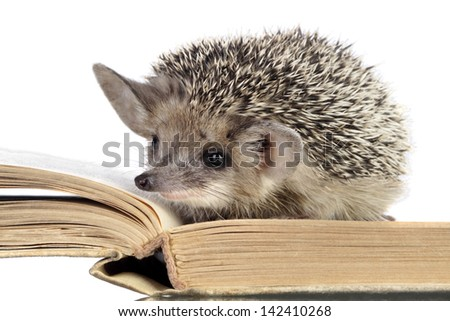 cute hedgehogs read book - stock photo