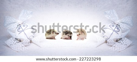 cute holiday hedgehog baby in christmas background - stock photo