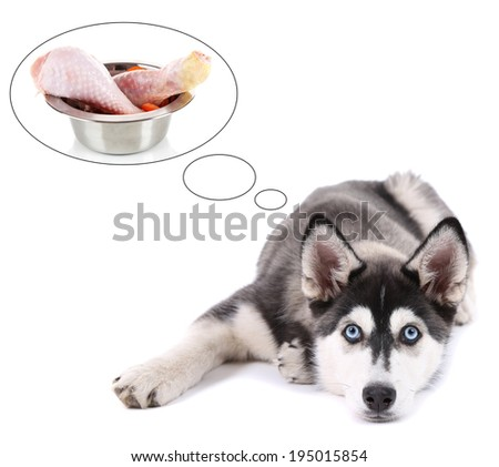 Cute husky puppy dreaming of meat, isolated on white - stock photo