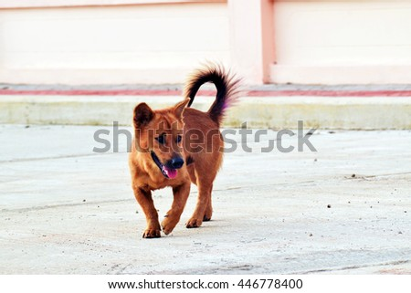 cute hybrid brown dog on concrete road. - stock photo