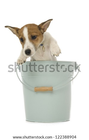 Cute Jack Russell Terrier dog laying down looking at the camera isolated on a white background - stock photo