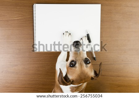 Cute Jack Russell terrier dog making notes in the album white sketch book. Empty space you can put your information. Looking to the camera - stock photo