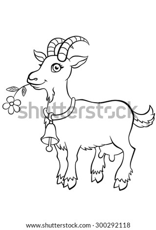 Cute kind goat standing in the field and smiling - stock photo